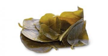 Κάπαρη (φύλλα)